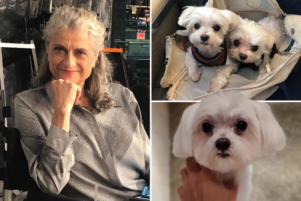Man Who Fatally Beat 'Law & Order' actress, Janis Dardaris's Dog Gets Probation, No Jail Time!