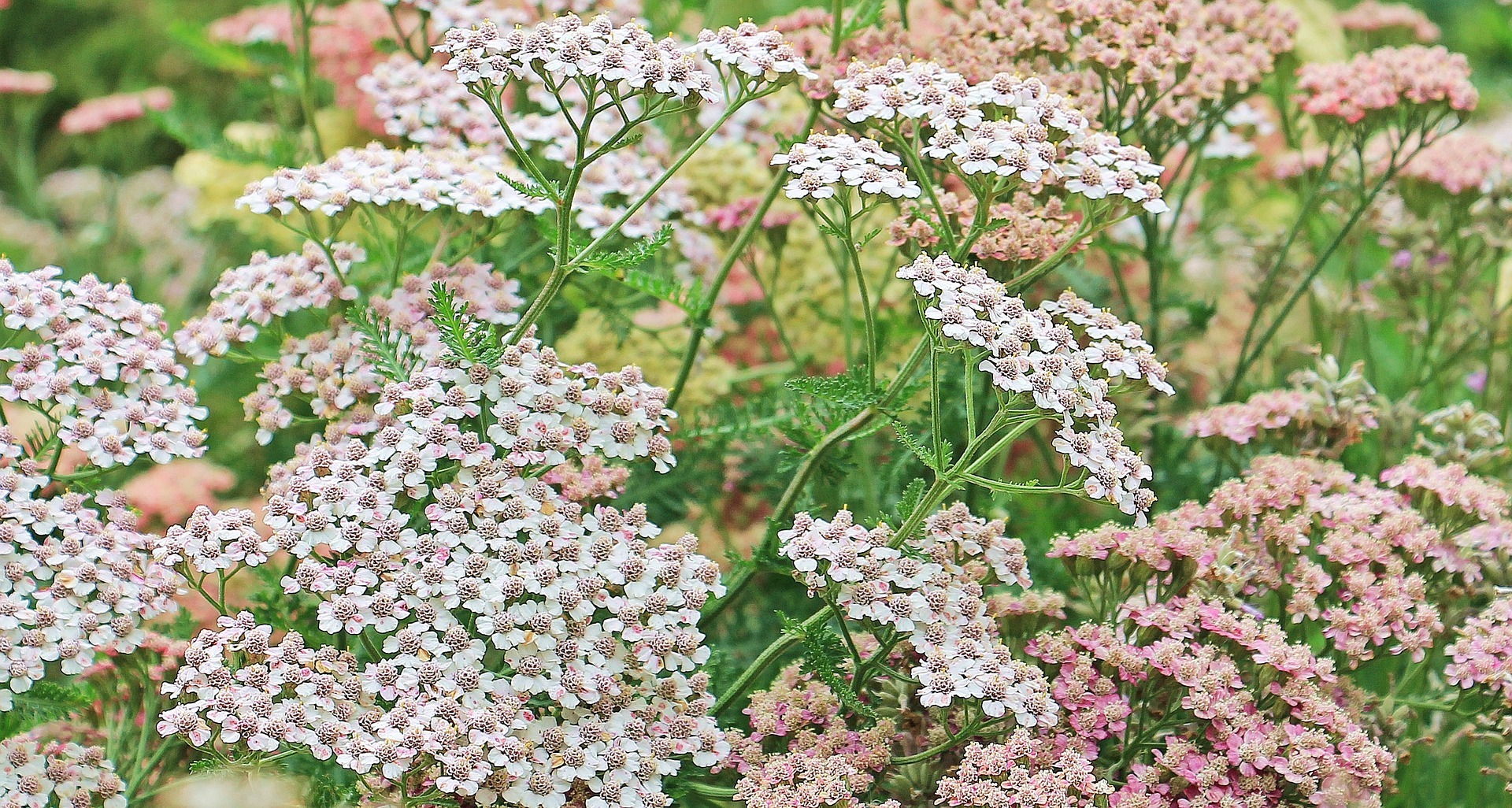 5 colorful flowers to add to your garden